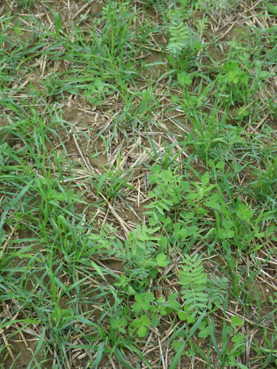 Que semer en juillet stunning que semer en juillet with que semer en juillet stunning semis au - Que semer en octobre ...